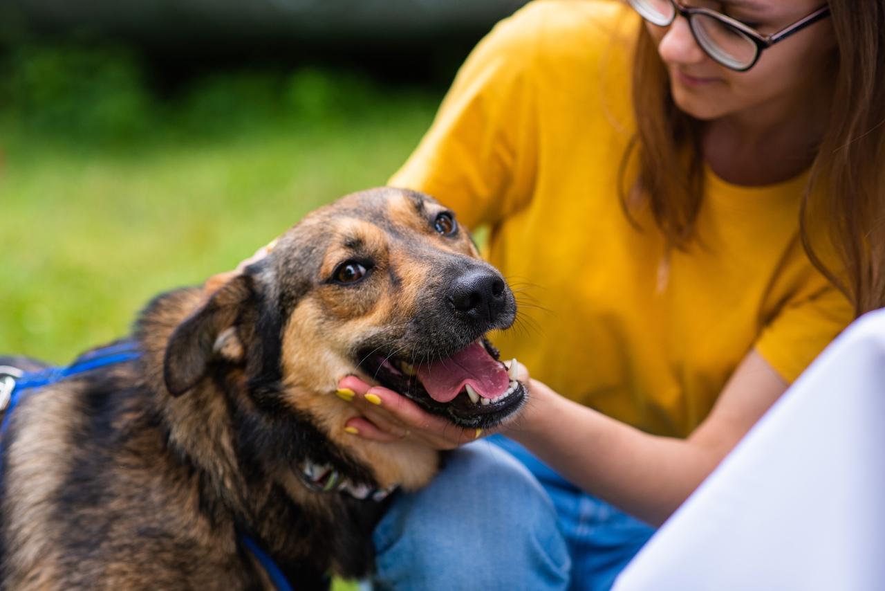 Выезды в приюты для помощи бездомным животных